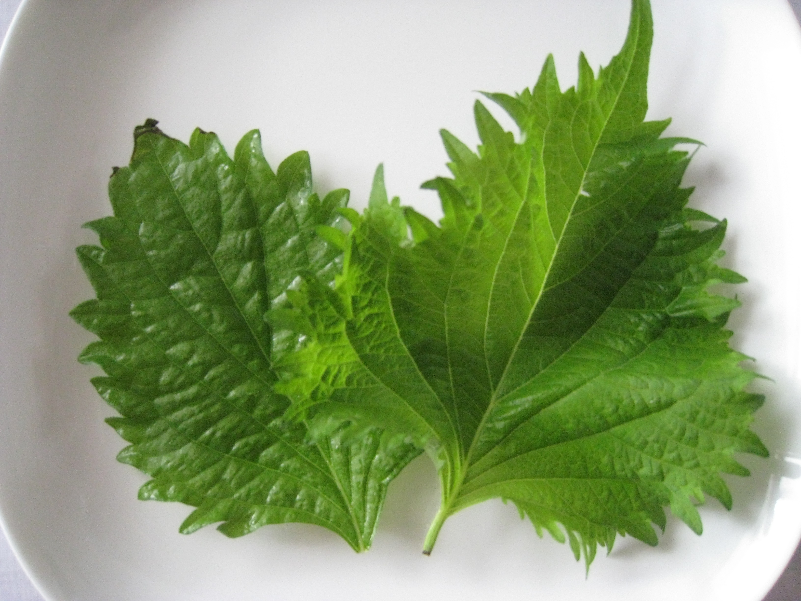 Japanese Herb Shiso Japan As It Is